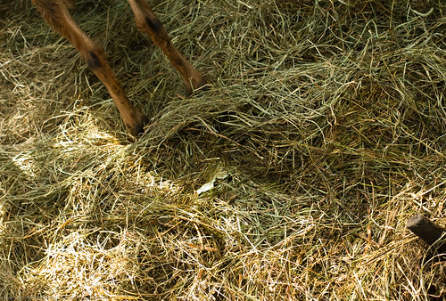 Humble Garden 2009: hay over unmentionable yuck