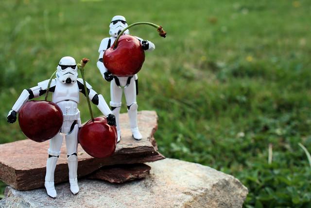 Summer Cherries (for Palpatine ?)