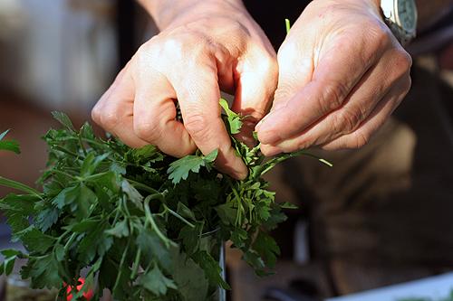 picking parsley