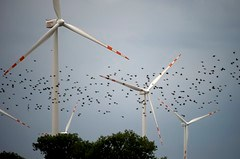Asosiasi sumber energi terbarukan - Island Lake, Burung