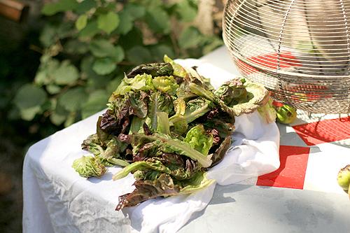 drying lettuce
