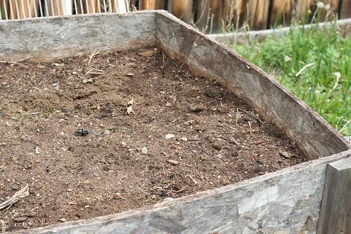 Dana's garden