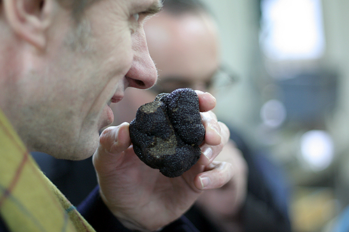 jean-louis sniffing truffle