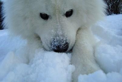 Snö o Zack
