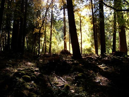 nbco-woods00