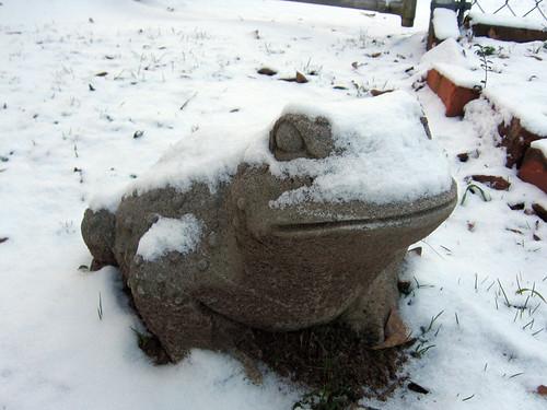 Snowy Frog