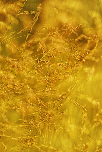 """meadow in sunny yellow • <a style=""""font-size:0.8em;"""" href=""""http://www.flickr.com/photos/22289452@N07/8984137469/"""" target=""""_blank"""">View on Flickr</a>"""