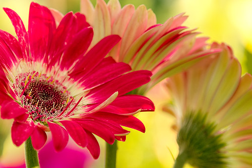 """garden-flowers • <a style=""""font-size:0.8em;"""" href=""""http://www.flickr.com/photos/22289452@N07/9286928374/"""" target=""""_blank"""">View on Flickr</a>"""