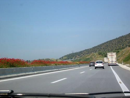 Blooming Roads