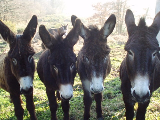 Castelnau road - donkeys