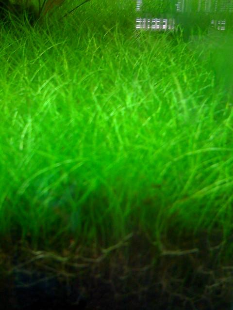 amazing aquarium grass | Explore jm3's photos on Flickr. jm3