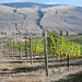Orofino   Passion Pit Vineyard