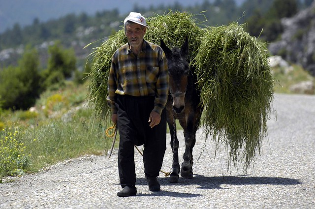farmer and donkey, cappadocia, turkey