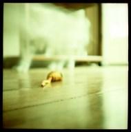 O Rato de Brinquedo e o Gato Fantasma / The Toy Mouse and the Ghost Cat