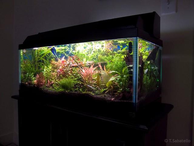 20 Gallon Aquarium   C02 enriched | anubiasgarden.com | By: Tom