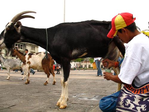 Milk Delivery in Guatemala