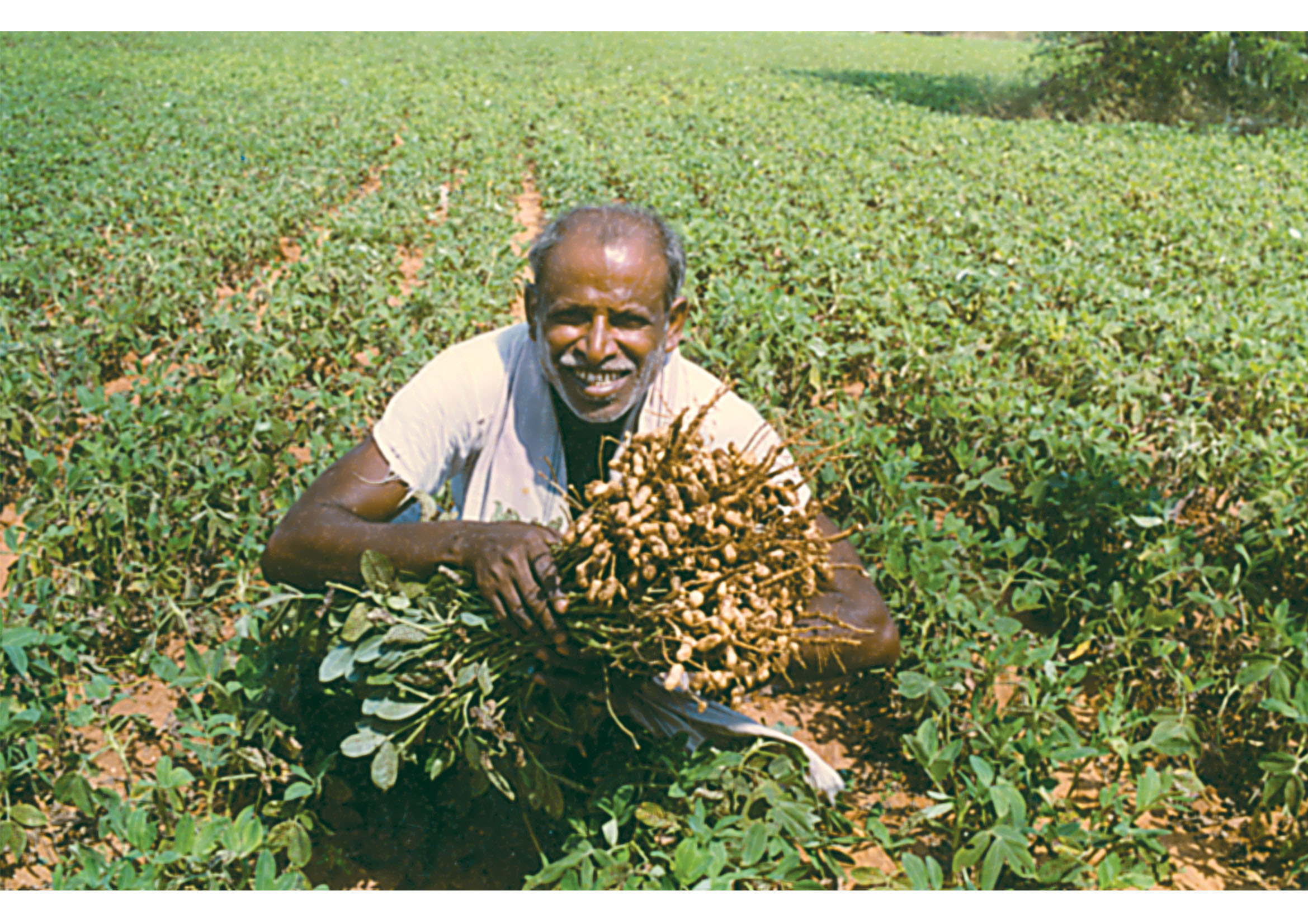 Food Crops in India Image by AglaSem