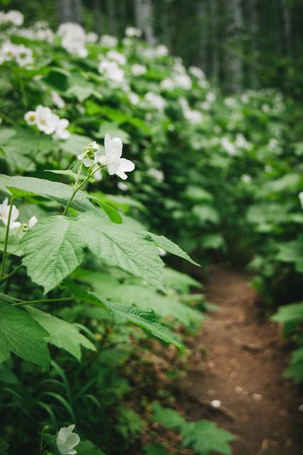 Hiking Colorado: Dense Pathway
