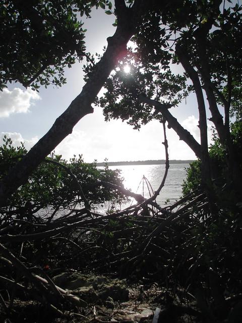 Mangroves at Knights Key RV Resort & Marina, Fla., Dec. 8, 2013