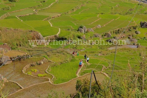 rice terraces5