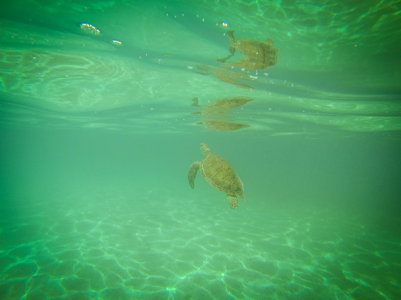 Snorkeling in Akumal-7
