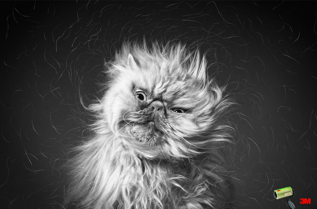 3M - Cat Hair