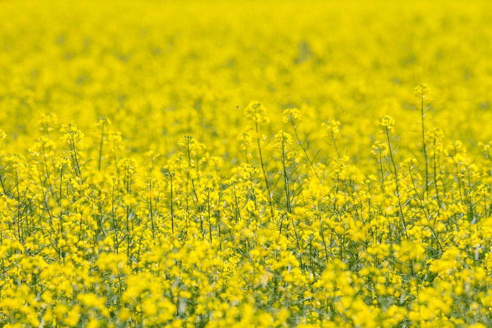 Un campo lleno de flores en uno de los caminos que conduce al Parque Nacional Caazapá. (Tetsu Espósito)