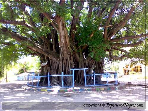 Balete Tree at Sipaway Island, Negros Occidental