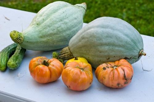 Humble Garden: Hubbard Squash