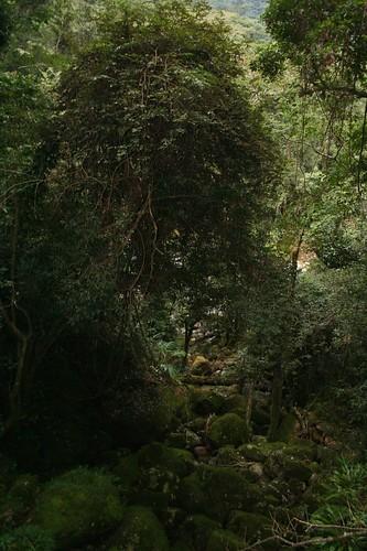 Mulanje Mountain Reserve, Malawi