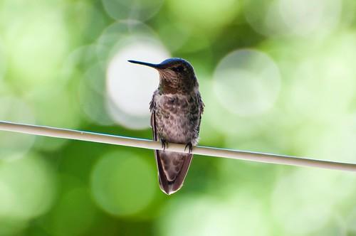 Bokeh Bird :) (sitting pretty)