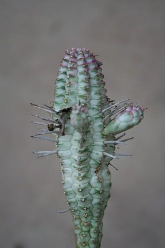 Weird cactus