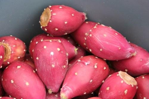 Prickly Pear Tunas