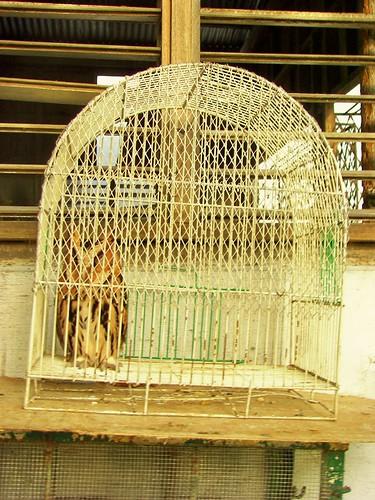 Cebu City Zoo by you.
