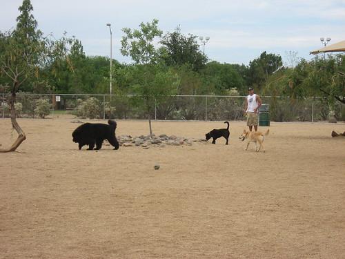 Udall dog park