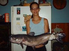 15 pound catfish