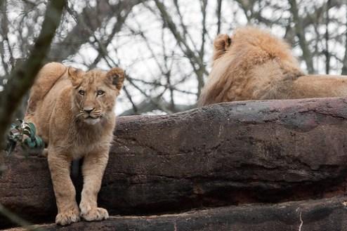 some cub