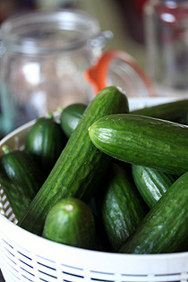 uncooked cucumbers
