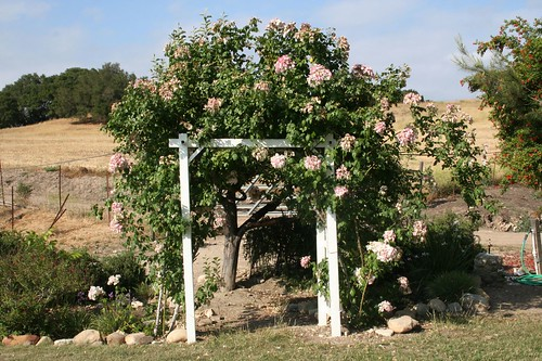 Pretty pergola at the winery