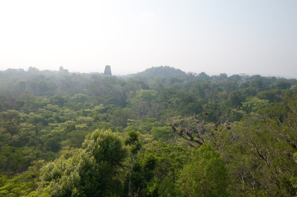 View from Temple IV in Tikal
