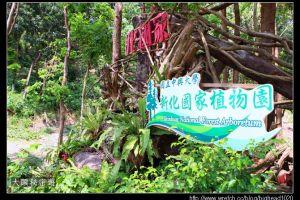 [台南]新化 新化林場