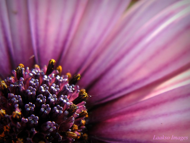 macro photography inspiration Sue Laakso