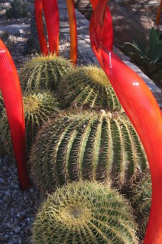 Chihuly exhibit: Desert Botanical Garden
