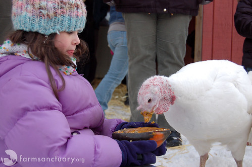 2008 NY Celebration FOR the Turkeys by Farm Sanctuary.