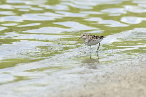 Tiny bird in Rouge Valley (Markham, Ontario).