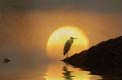 heron evening meditation