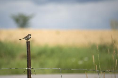 Bird on a post.