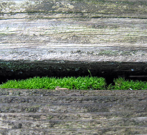 Moss on Deck