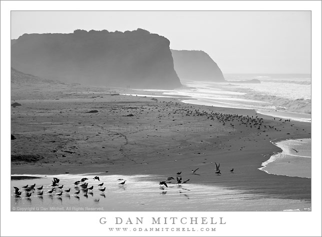 Birds and Winter Surf