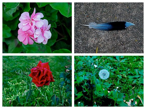 Random Pics from a Walk Around My Neighbourhood